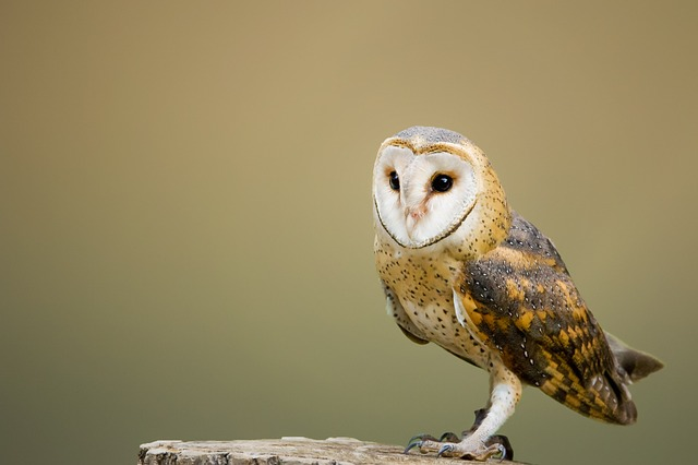Registration for OWL (Our Whole Lives) Sexuality Education for Grades 4-6 is open!