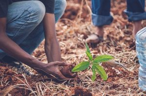 Nature Branch Tree Planting Leaves Green
