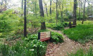UUFF Memorial Garden Spring 2020